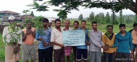 700 mango saplings distributed in Harsul
